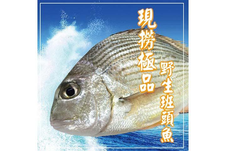 班頭魚(黃錫鯛)