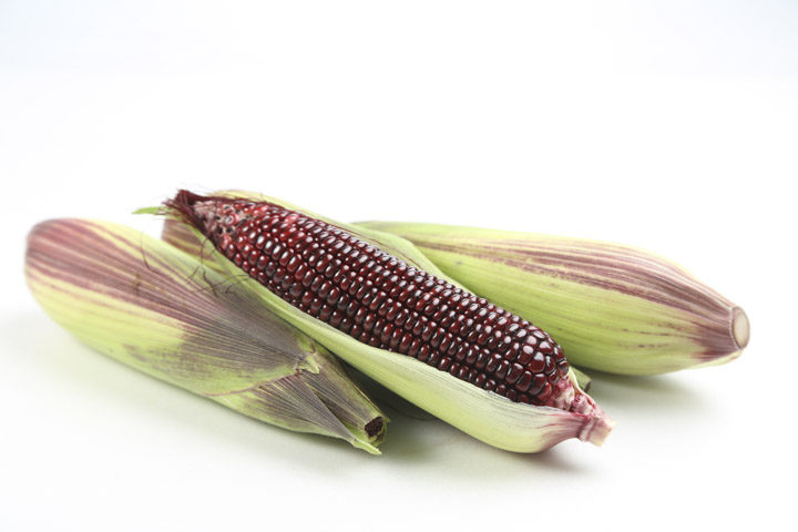 黑寶紫糯玉米
