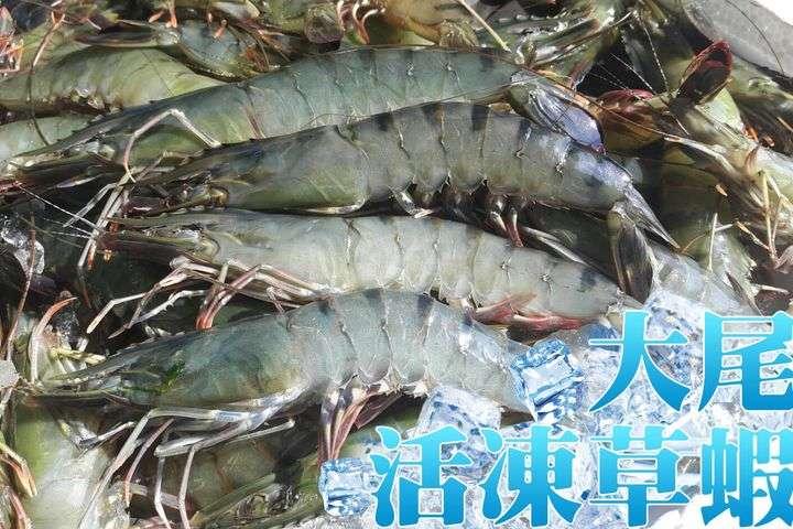 嚴選優格大草蝦600g