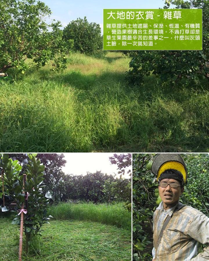 大地的衣賞 - 雜草  雜草提供土地遮陽、保溼、恆溫、有機質,營造果樹適合生長環境。不過打草卻是草生果園最辛苦的差事之一,什麼叫灰頭土臉,除一次就知道。