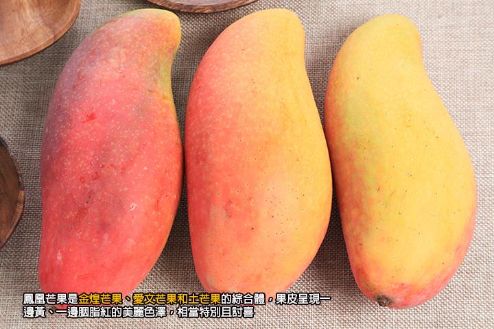 鳳凰芒果是金煌芒果、愛文芒果和土芒果的綜合體,果皮呈現一邊黃、一邊胭脂紅的美麗色澤,相當特別且討喜