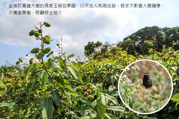 坐落於高雄大樹的吳家玉荷包果園,以天地人和為出發,務求不影響人體健康、不傷害果樹、照顧好土地!