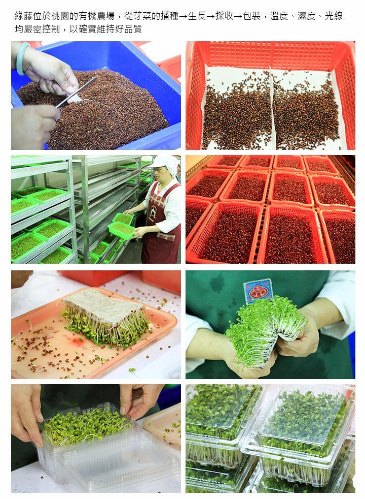 綠藤位於桃園的有機農場,從芽菜的播種→生長→採收→包裝,溫度、濕度、光線均嚴密控制,以確實維持好品質