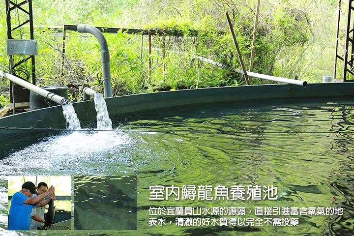 室內鱘龍魚養殖池  位於宜蘭員山水源的源頭,直接引進富含氧氣的地表水,清澈的好水質得以完全不需投藥